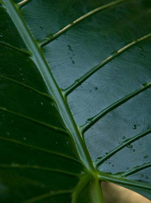 Blatt in Grün